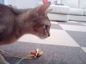 ロックオン中の猫ちゃん