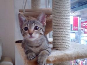中で一番小っちゃな猫ちゃん